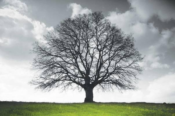 היכרות חיה עם גן שברובו נכרת והומתצילום: Thinkstock