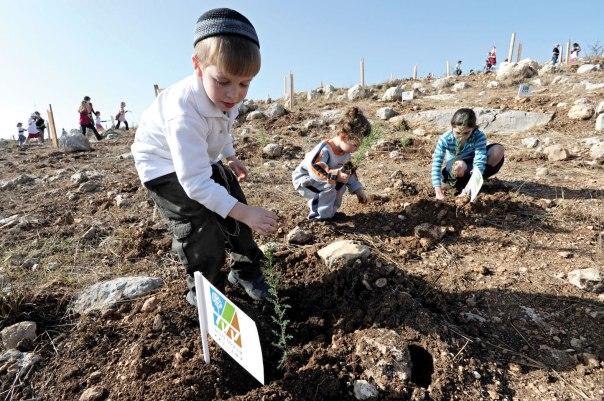 ולהכות שורשים עמוקים בהרי יהודה. נטיעות, 2010. צילום: פלאש 90