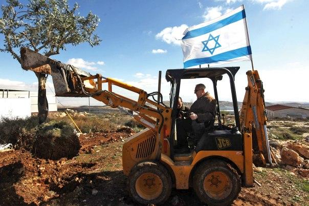 """מוטיב עץ הזית משקף ערכים וגישות פוליטיות. ח""""כ רובי ריבלין נוטע עץ זית, מגרון צילום: פלאש 90"""