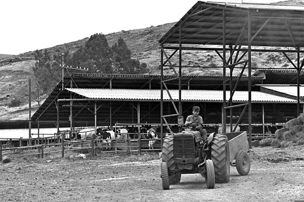 """קרבן או ייעוד? קיבוץ גשר, 1968. צילום: משה מילנר, לע""""מ"""