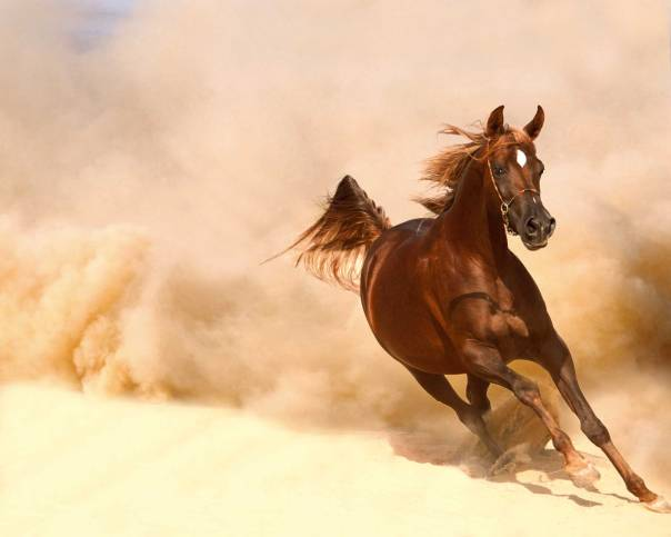 מאבק מנהיגות בין אדם לסוס  צילום: שאטרסטוק