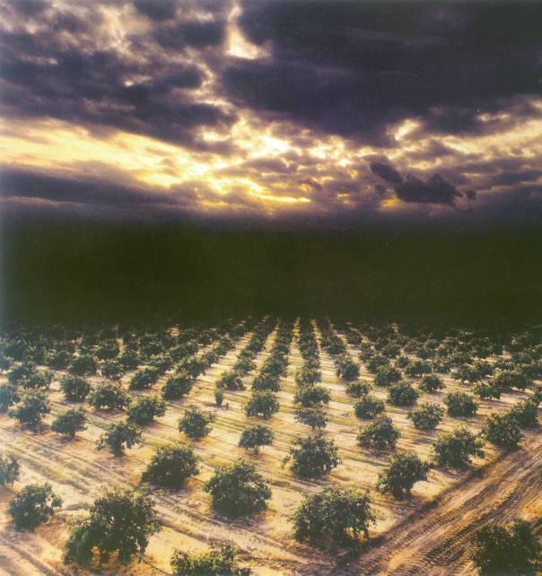 """שילוב בין הארה וגילוי לצעדים קטנים ואפורים. חנן גטריידה, הפרדס בקבוצת שילר 1995 מתוך הספר """"ישראל שבילי צילום"""""""