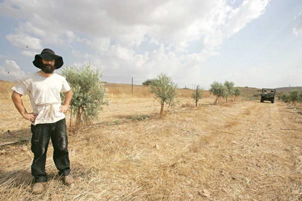 על השמיטה להיות נוכחת בחברה הישראלית כולה. חקלאות ביישוב משכיות  צילום: מרים צחי
