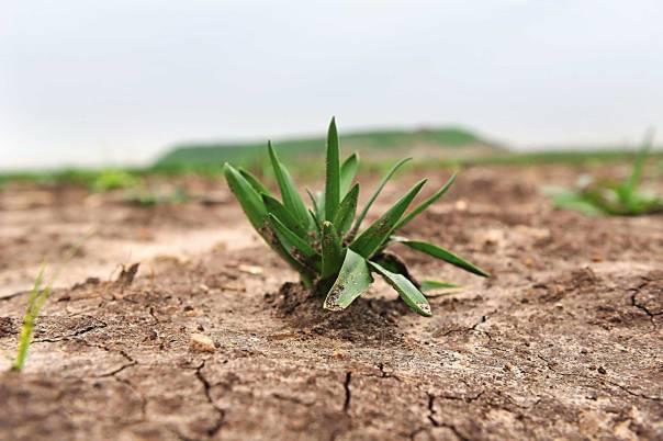 האמנם הצמח זוכר? צילום: ראובן קסטרו