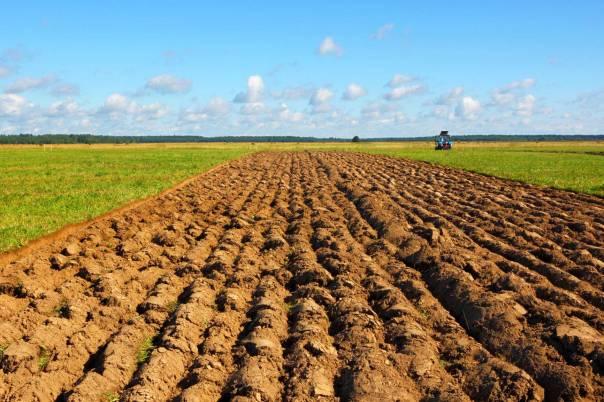 כמעשה עבודת האדמה, כך עבודת האדם: חרישה וזריעה, עידור ותיחוח, קציר ועימור צילום: שאטרסטוק