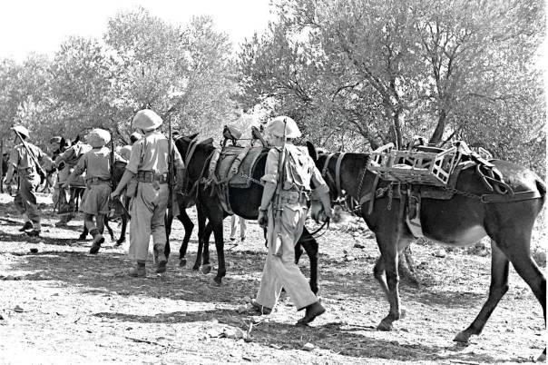 יחידת נהגי הפרדות, 1950 צילום: דוד אלדן