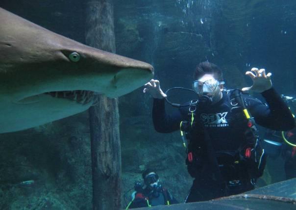 ניתן היה להושיט יד דרך סורגי הכלוב ולגעת בו. צלילה עם כרישים צילום: אי.פי.אי