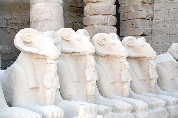 """כונה """"מלך האלים"""" ו""""אדון השמים"""". ספינקסים בעלי גוף אריה וראש כבש במקדש אמון בלוקסור צילום: Steve F־E־Cameron"""