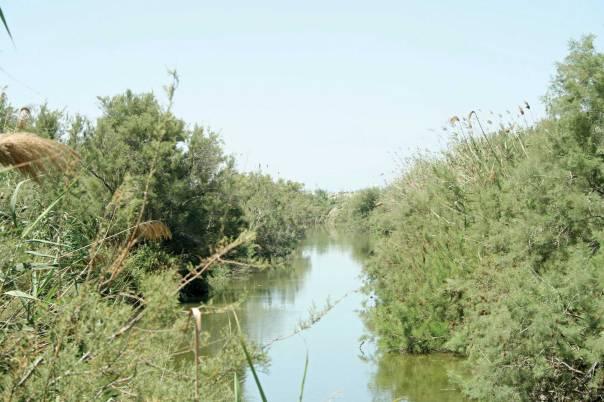 """""""בנהר תנינים איומים"""". נחל תנינים  צילום: Golf Bravo"""