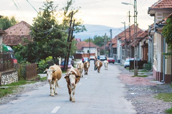 """""""לא הייתי שייך לכפר. בבתים נלחשה עלי תמיד יהדותי"""". רומניה צילום אילוסטרציה: שאטרסטוק"""
