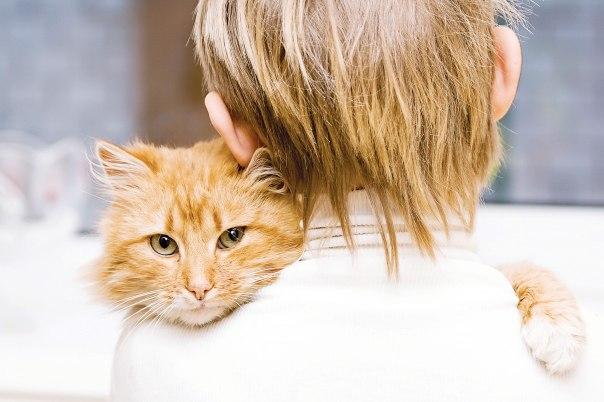 החיבור בין הילד לחתולה מרחיב את הפתח בין שתי הדירות צילום אילוסטרציה: שאטרסטוק