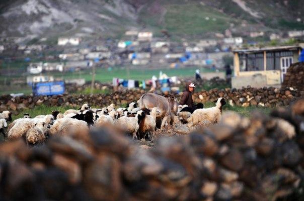 בסיפורו של שמי, מנגינת החליל של רועה הצאן מתנפצת לאלפי רסיסים. רועה צאן  צילום: אי.אפ.פי, 
