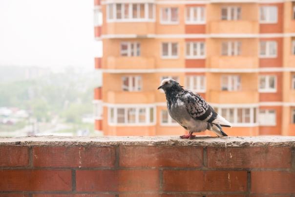חברתה היחידה היא היונה המפרפרת על אדן החלון צילום אילוסטרציה: שאטרסטוק
