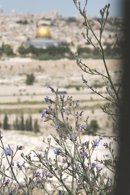 """""""להשמר מהאיסור של הכניסה למקום המקדש"""". מבט אל הר הבית, 2015 צילום: מירי צחי"""