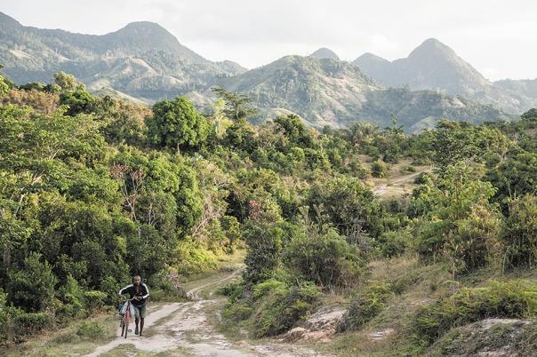 אחת הארצות העשירות בעולם מבחינה אקולוגית. מטע עצי וניל במדגסקר צילום: איי.אפ.פי