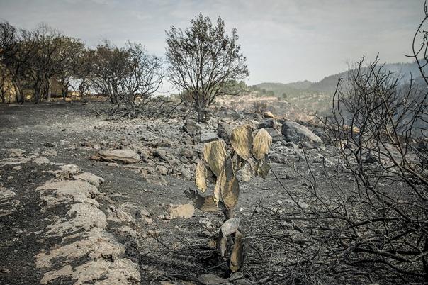 לוקח זמן עד שהתקשורת מודה שהשרֵפות הן הצתה מכוונת. שדה שרוף ליד נטף, נובמבר 2016 צילום: יונתן זינדל, פלאש 90