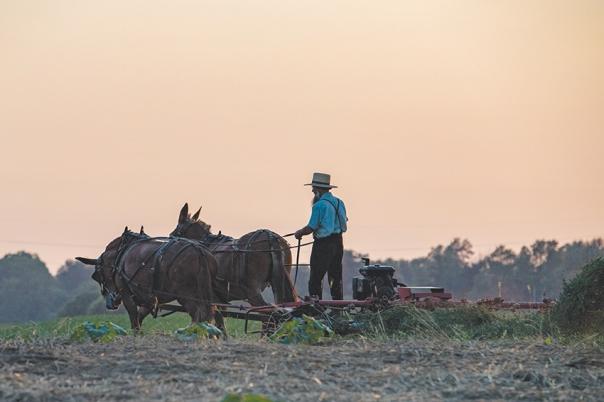 תיאור נאמן של חיי הכפר, אך זו לא הנקודה המרכזית צילום: שאטרסטוק